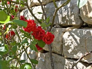Roses-on-Wall-4