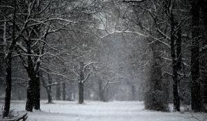 Snow-Scene (Nikki Bajda)